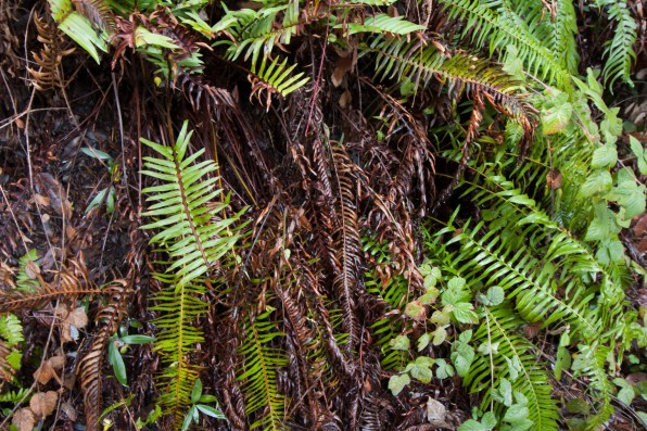 161124-wunderlich-new-and-old-ferns