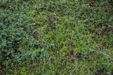 161124-wunderlich-wall-of-green