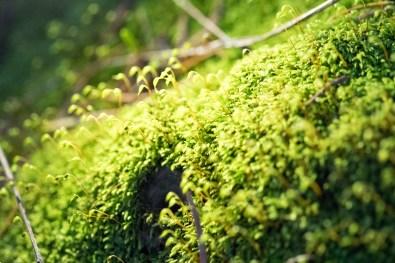 illuminated-moss-garden