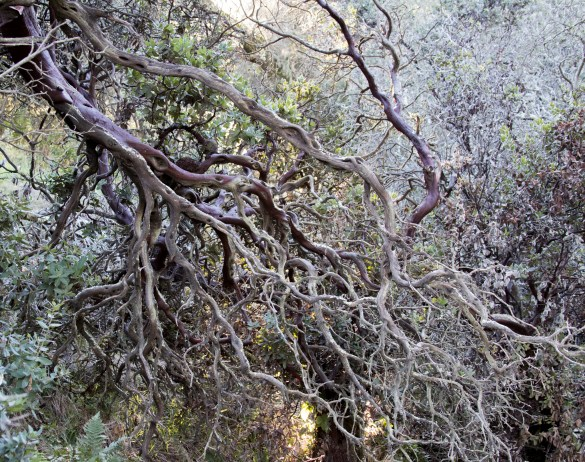 022417twisted-branches