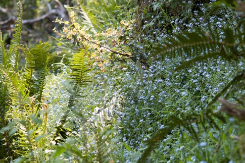 042917stinson glowing flowers and ferns