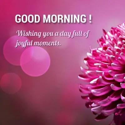 Good Morning Flowers: Wishing you a day full of joyful moments