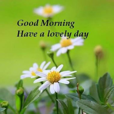 good morning pics have a lovely day