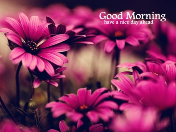 good morning pictures have a nice day ahead