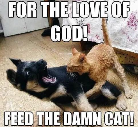 70 funny cat memes everyone can relate to bayart