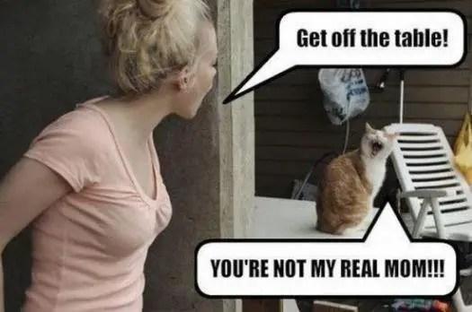 funny cat sayings