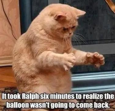 kitty memes