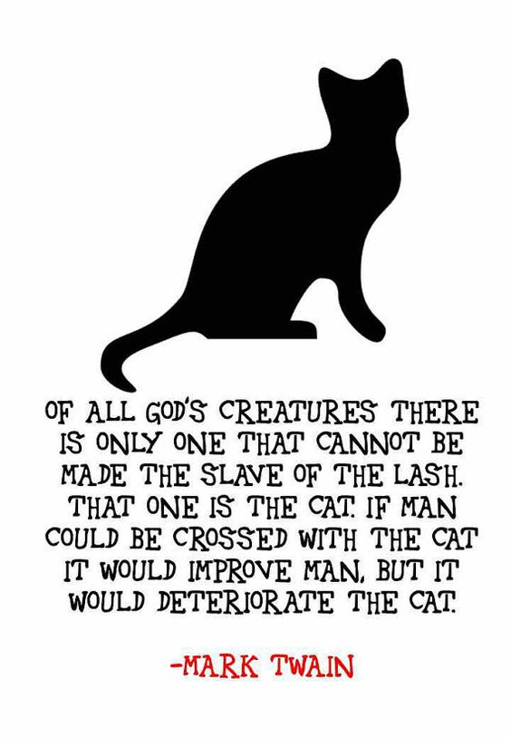 cat quotes and human relationship