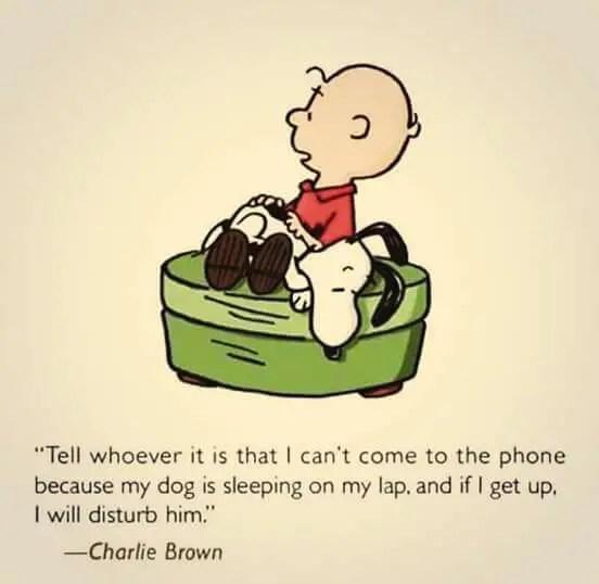 dog quotes best friend