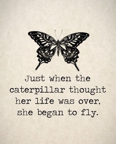 butterfly quotes with images