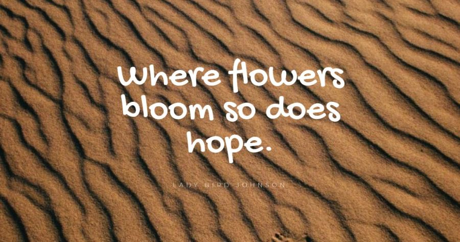 bloom quotes
