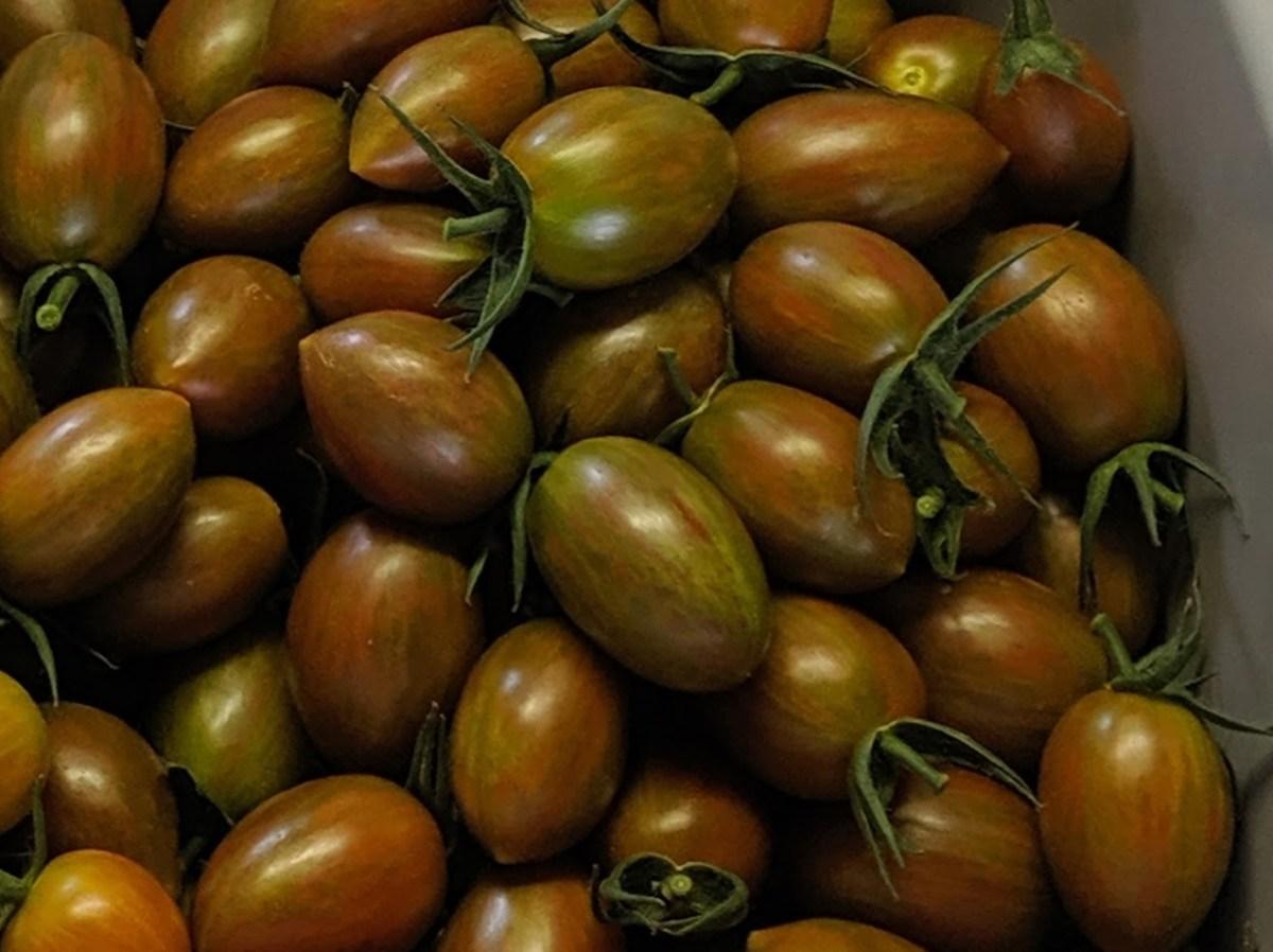belota tomato