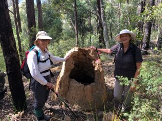 Mary, Karen and hollow termite mound