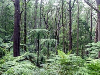 Tree ferns in every direction