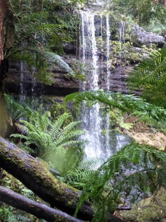 Iconic Tasmanian scenery at Russell Falls, Mt Field National Park