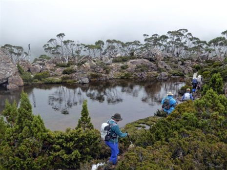 One of the string of tarns on the Tarn Shelf, Mt Field National Park