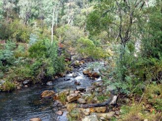 Micalong Creek upstream from campground
