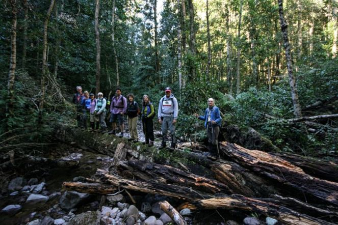 Cool temperate rainforest