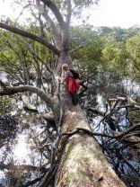 Kay on one of the horizontal swamp mahoganys