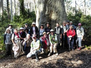 At the base of the big spotted gum