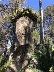 Standing stone crowned with a rock orchid garden