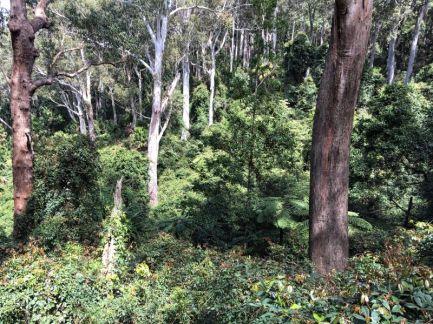 Lush gullies by Dangerboard Road
