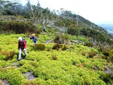 Sharon leads the pack along the Budawang Range