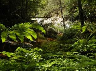 Beautiful Diamond Creek