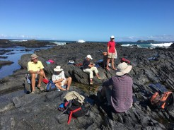 Lunch perches at North Head Rockpool