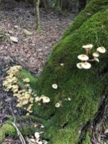 Another fungus garden