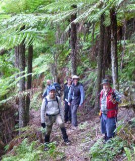Shoebridge Track treeferns