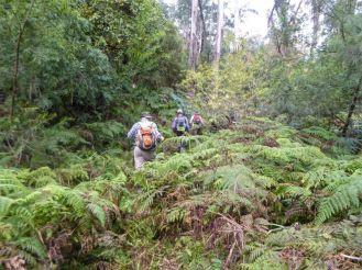 Ferny undergrowth