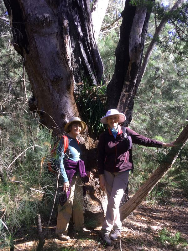 Joan and Karen with native orchid in Sydney peppermint (Eucalyptus piperita)