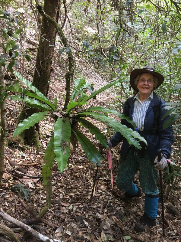 Betty and hanging birdsnest fern