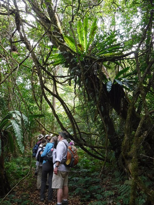 Walking through vines, ferns and cycads.