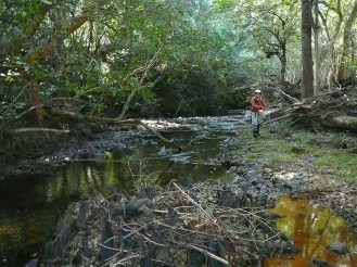 Barry takes a look further along the creek.