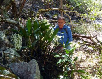 Rob and more orchids