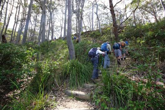 Climbing the Burrawang walk to the lookout.