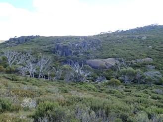 Rocky outcrops.