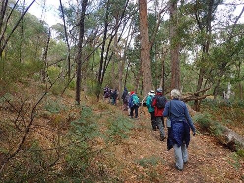 Fyans walk through open forest.