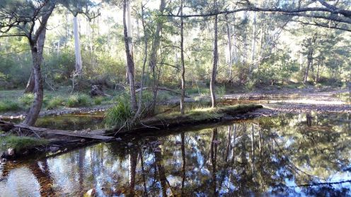 Woila Creek reflections
