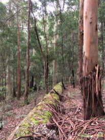 Some big trees