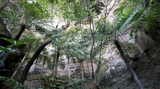 Ferns at entrance of Cathedral Cave