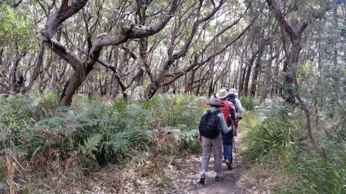 Last leg through bushland from the coast to the cars