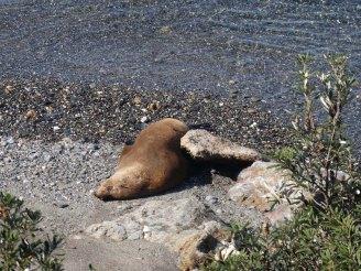 Seal on the beach below