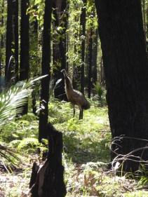 Emu spotting!