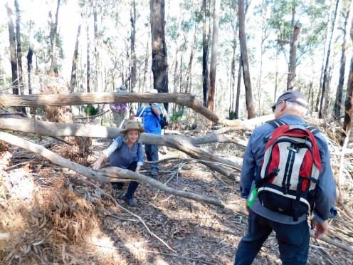 Karen G negotiating a fallen tree