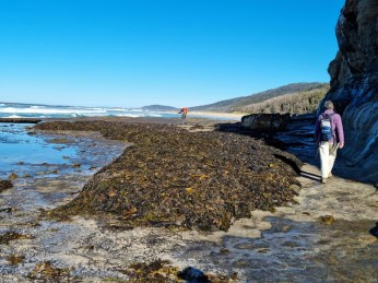 Just a bit of seaweed to navigate
