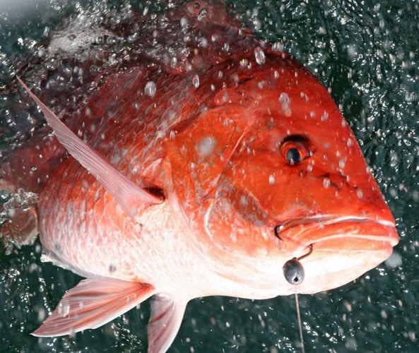 Second Snapper Season Starts Today