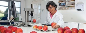 New varieties from Plant & Food Research local labs comprise 13% of NZ apple exports.